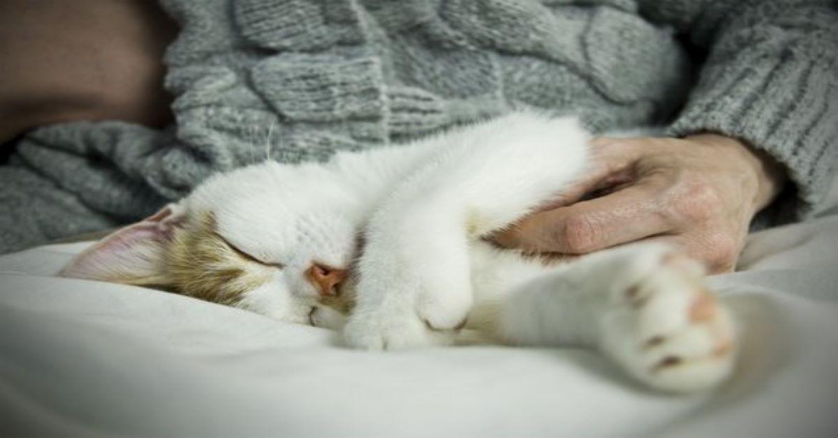 gatto-che-dorme-sul-letto