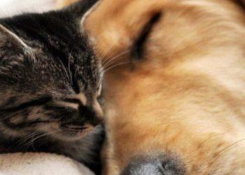 gatta-ritrovata a-200-km-di-distanza-grazie-all'-aiuto-di-un-angelo
