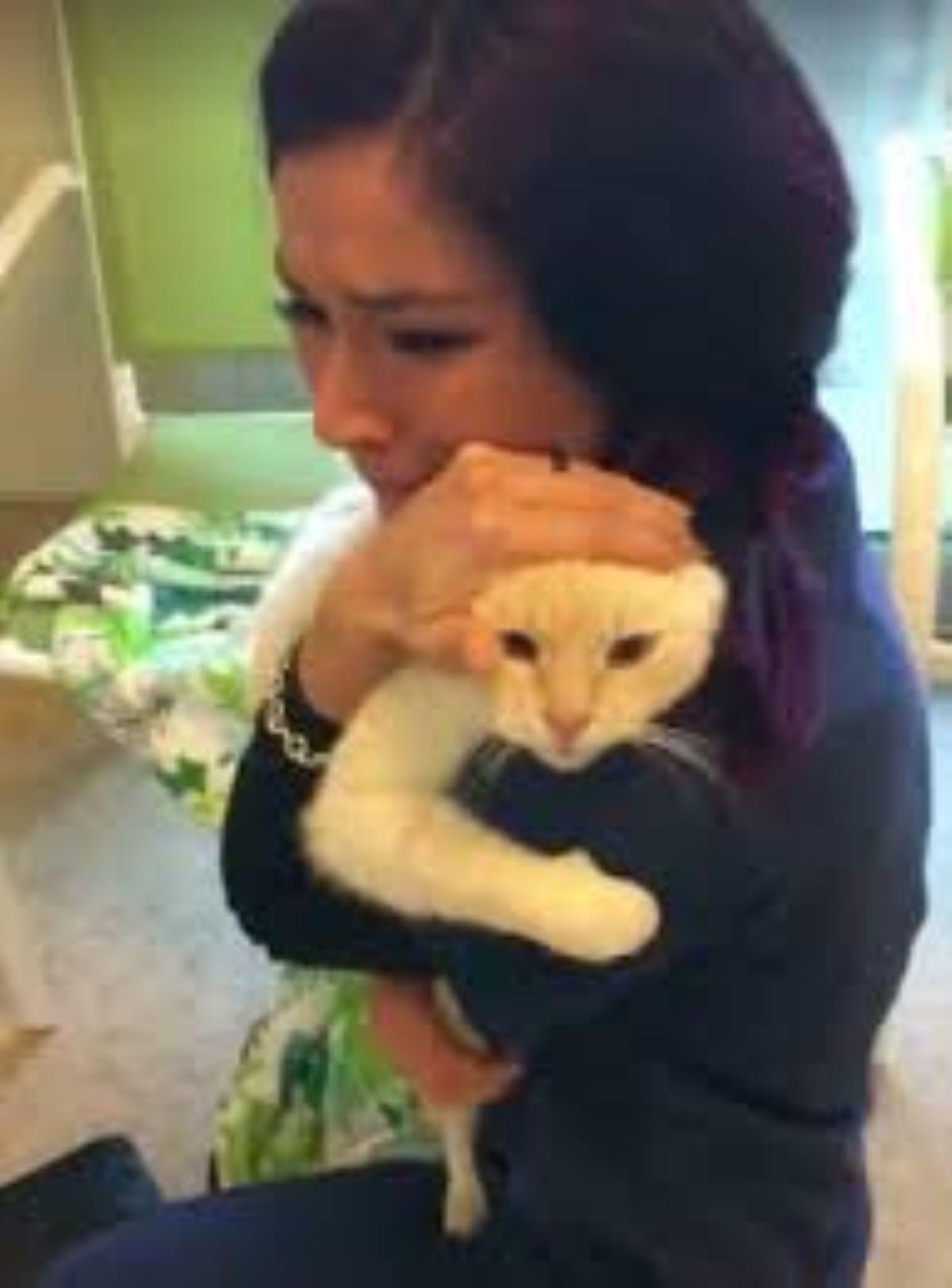 gatto-in-braccio-alla-proprietaria