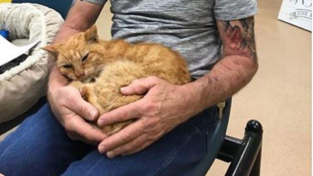 gatto-ritrovato-in-braccio