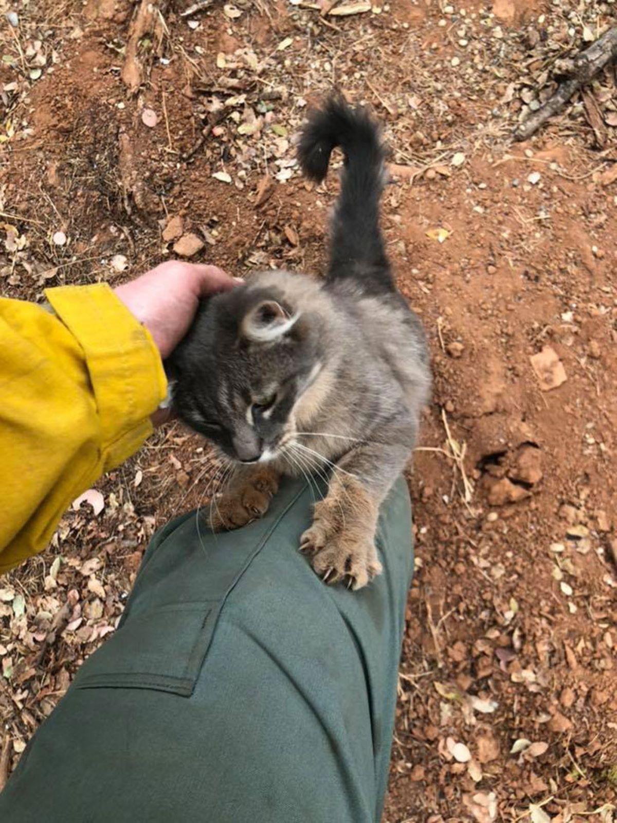 gatto-cerca-protezione