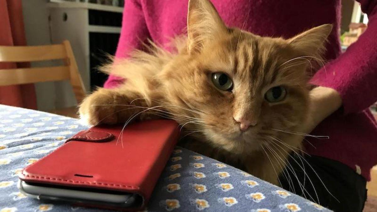 gatto-con-telefonino