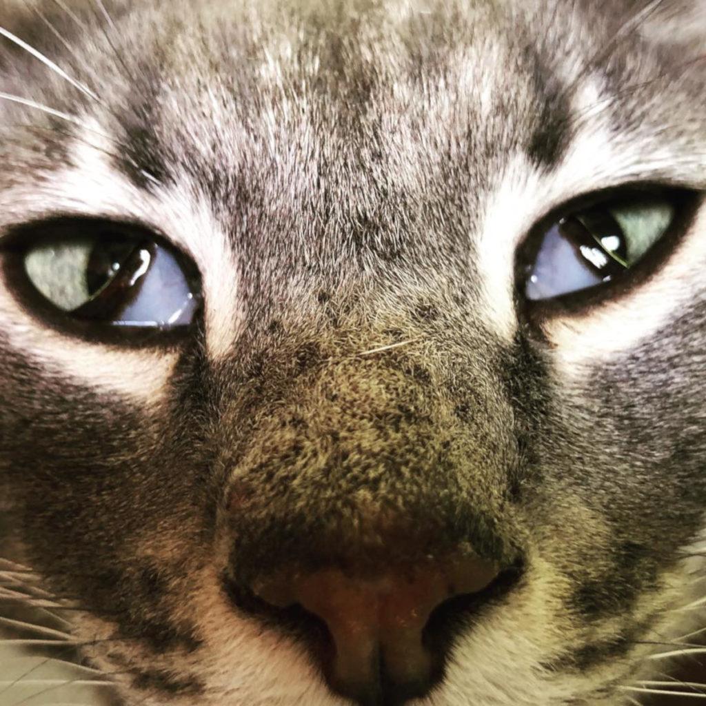 gatto-sindrome-di-haw