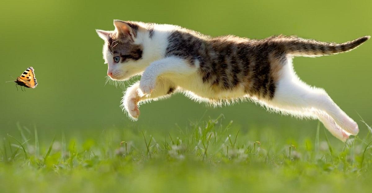 gatto insegue farfalla