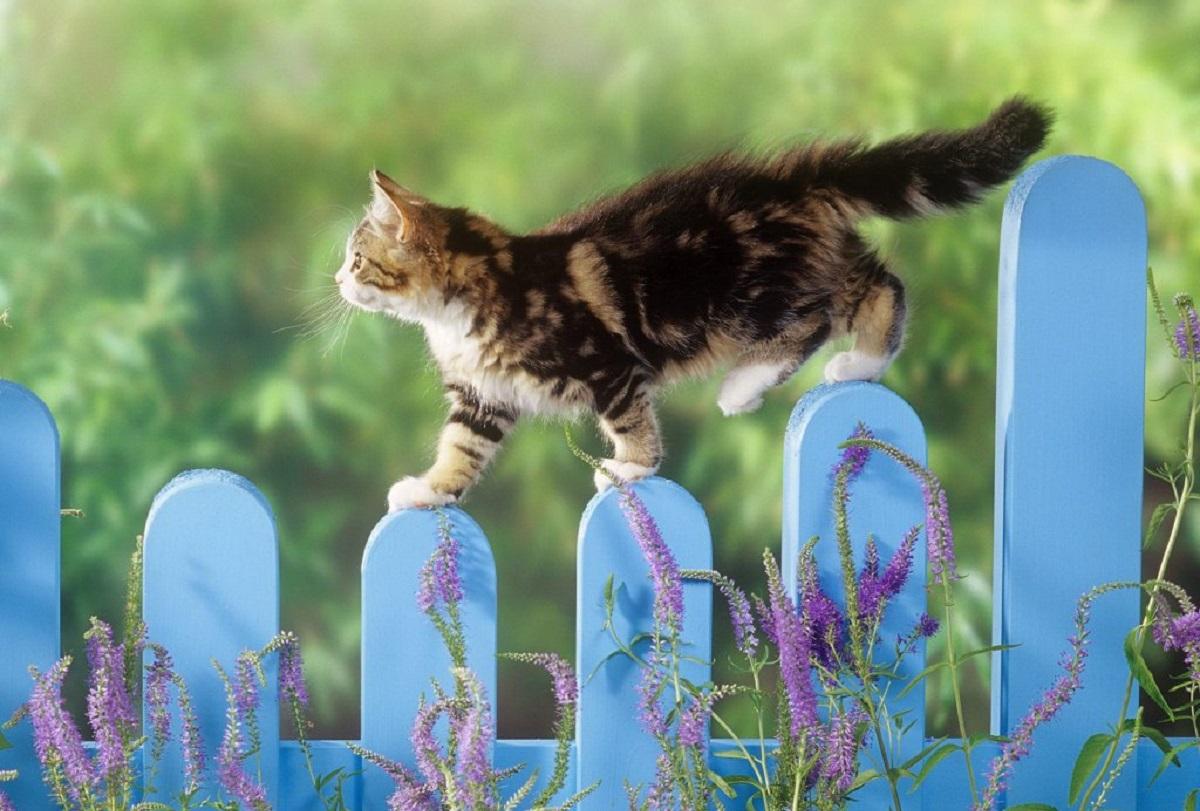 gattino su staccionata