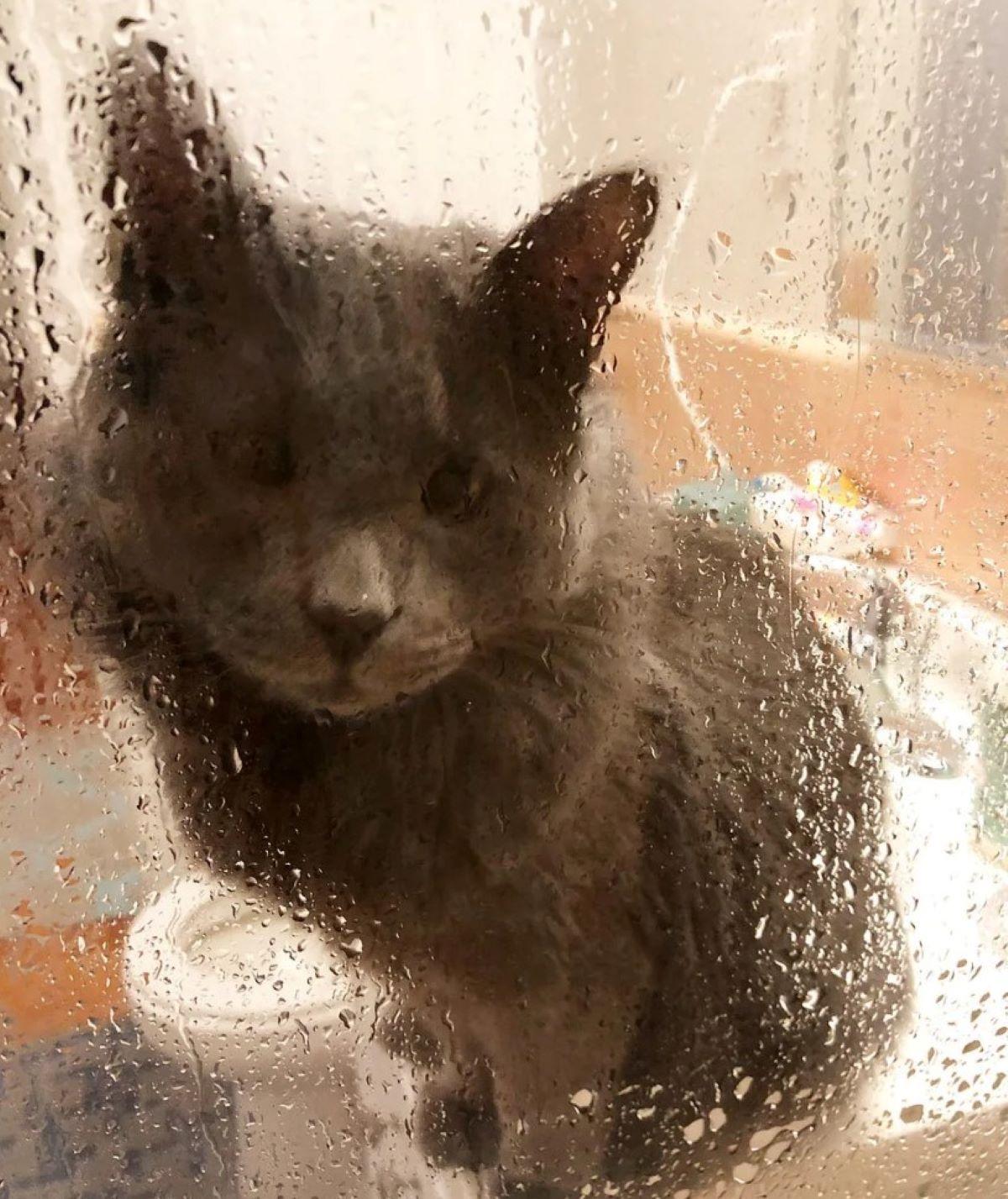 gatto-che-guarda-nella-doccia