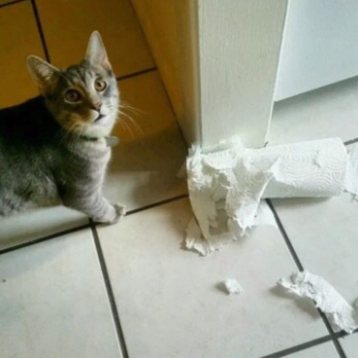 gatto-con-rotolo
