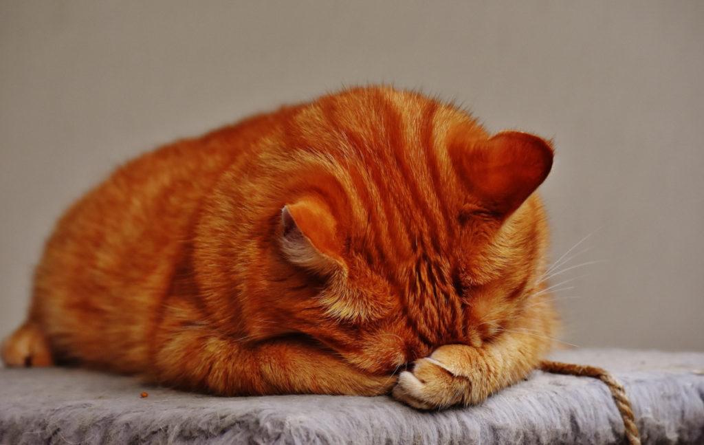 un gatto triste che dorme