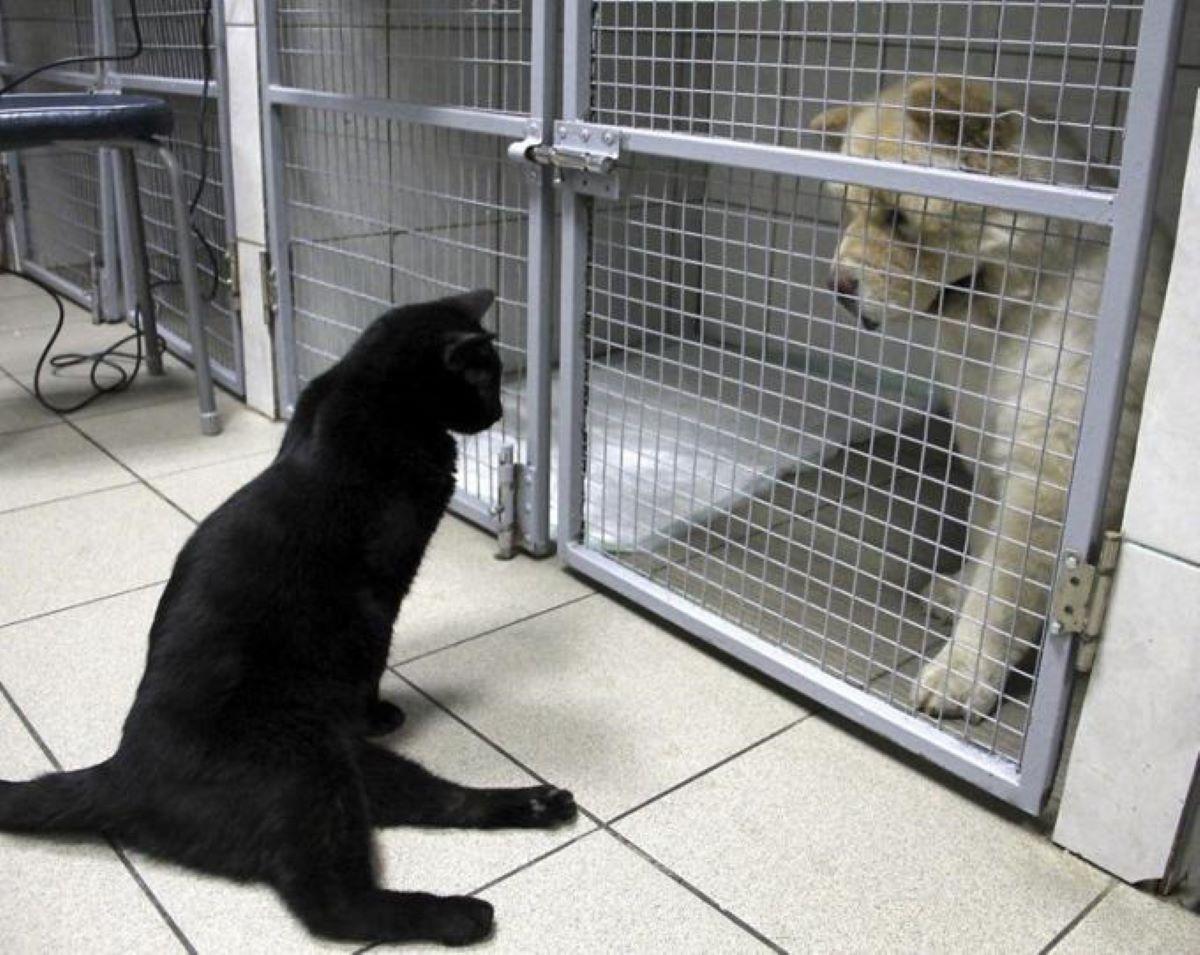 gatto-zoppo-guarda-cane