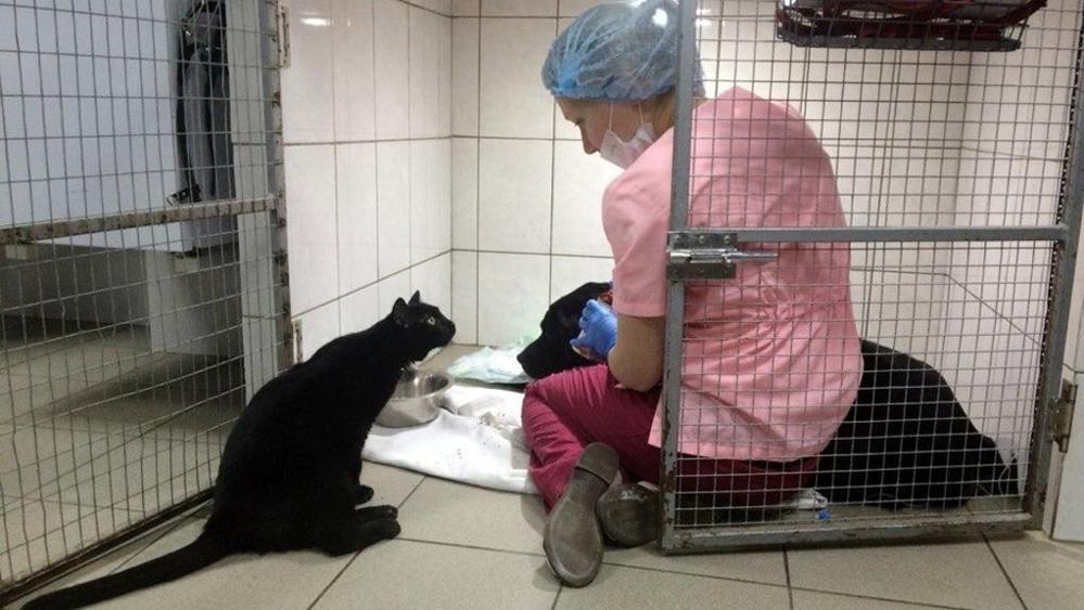 gatto-aiuta-dottoressa