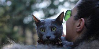 gatto sulla spalla