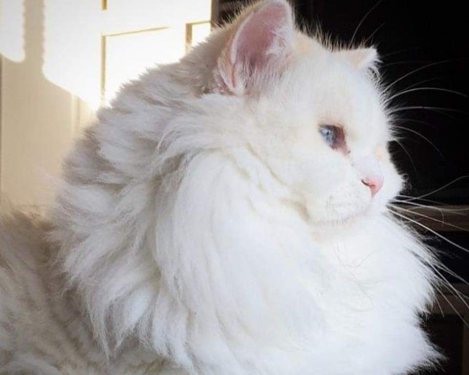 la famiglia ama la gattina silas