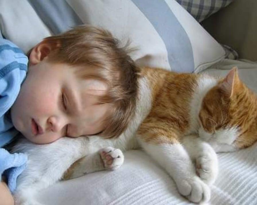 il-gatto-dorme-con-bambino