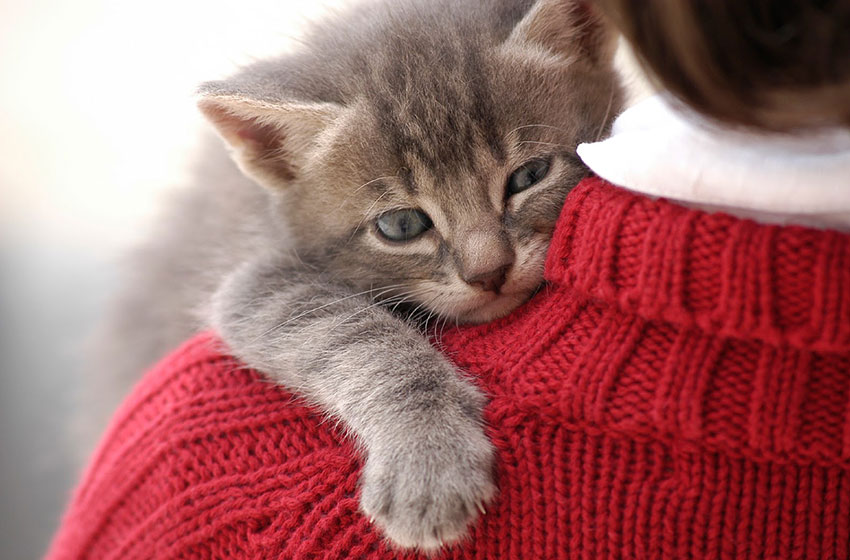 gatto ci ama tanto