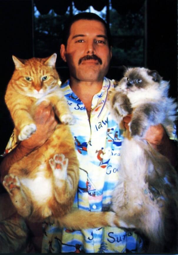 i gatti la famiglia di freddy