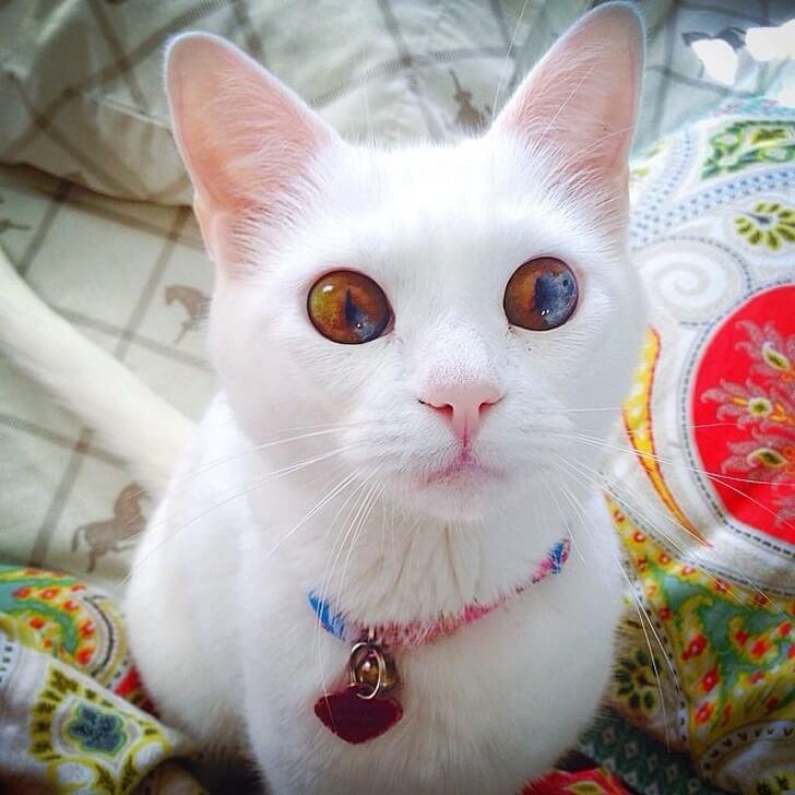 gattino-occhi-particolari