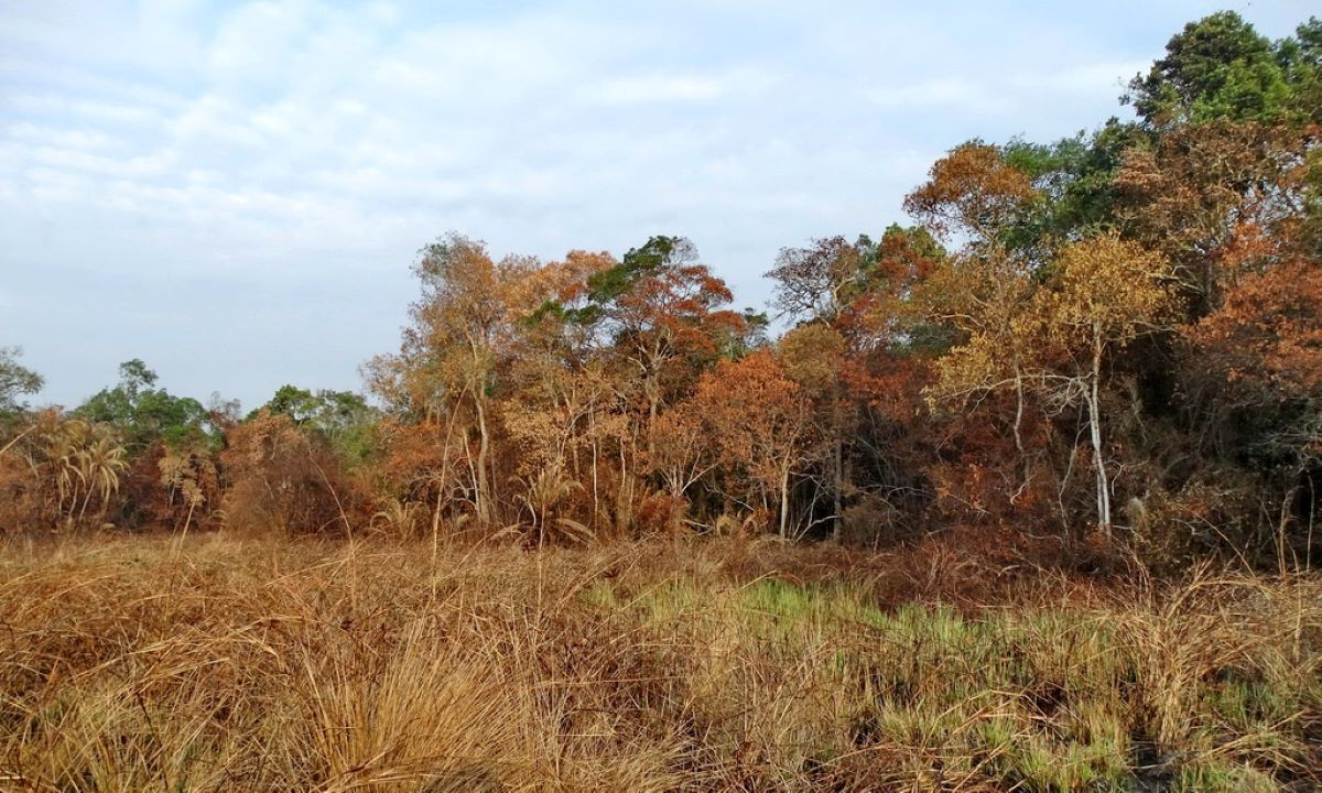 foresta-pluviale-Tanzania