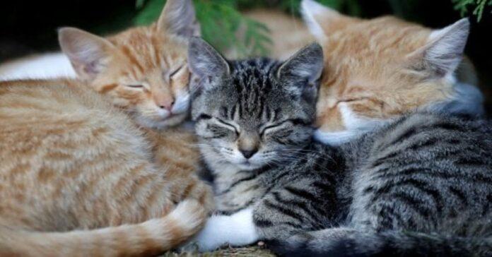 i-gatti-e-le-loro-pose-15-immagini-piene-di-dolcezza-e-simpatia
