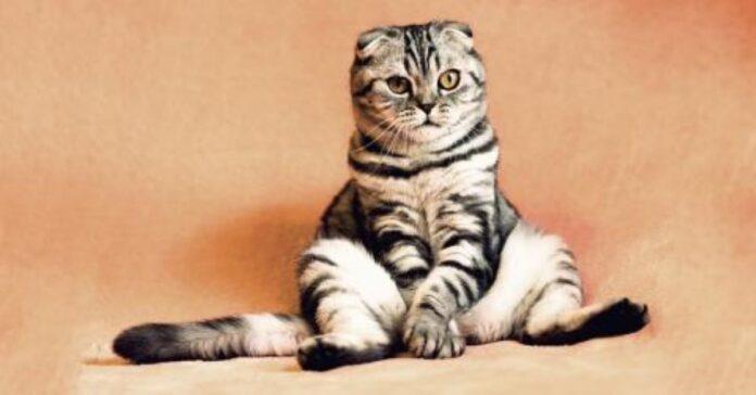 i-gatti-riconoscono-il-loro-nome-ma-ci-ignorano
