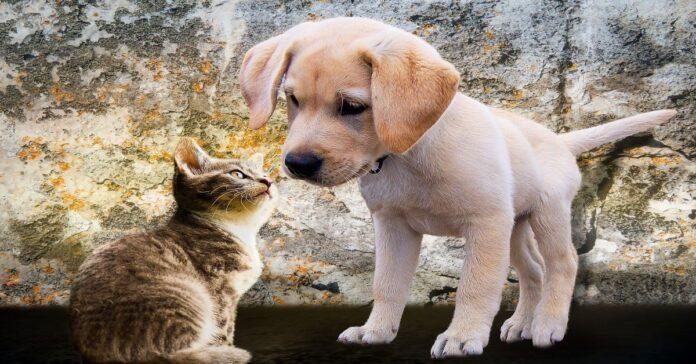il-gatto-è-il-più-intelligente-tra-l'uomo-e-cane