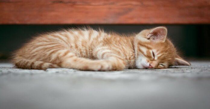 il-gatto-e-le-posizioni-in-cui-dorme