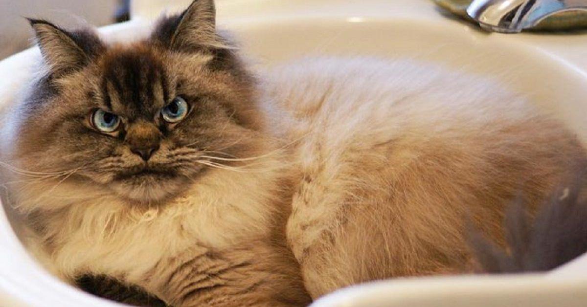 Il Gatto Sempre Imbronciato Il Mio Gatto è Leggenda