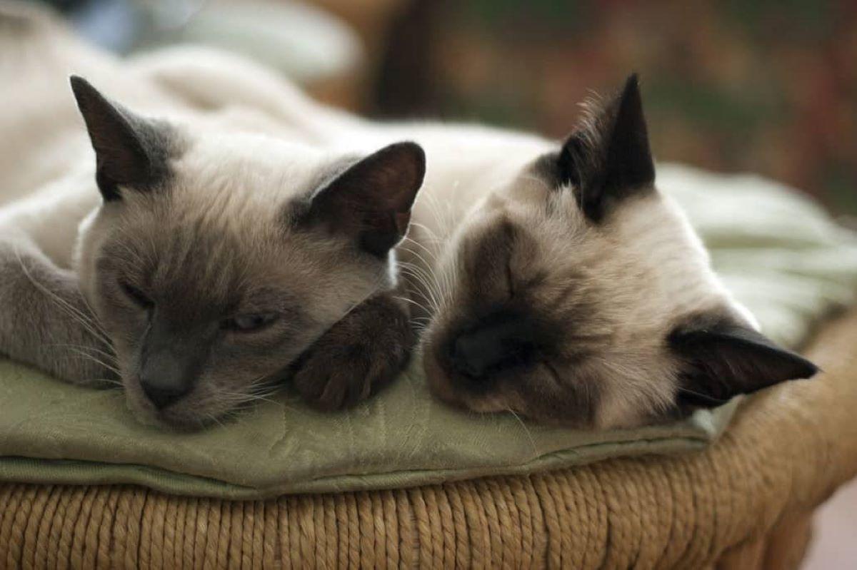 gatti-che-stanno-insieme