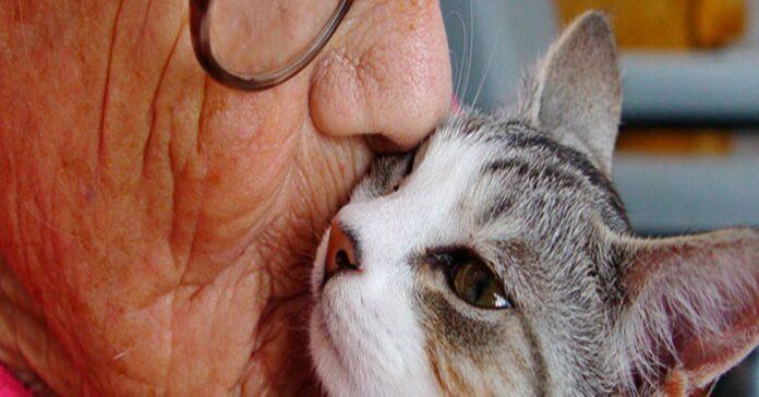 il-nostro-gatto-e-come-dimostrargli-affetto