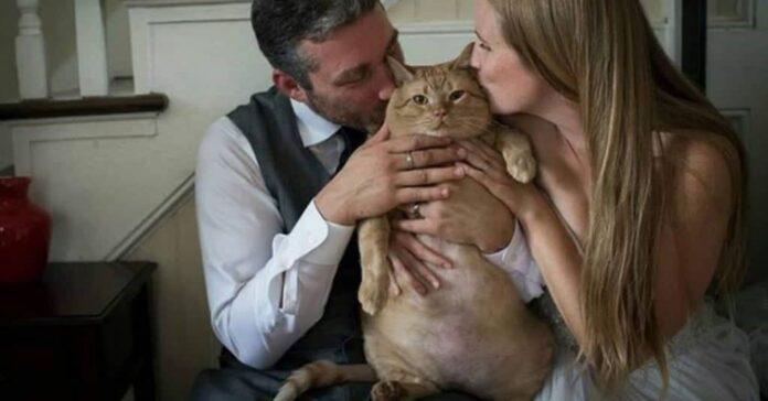 il gatto vito foto matrimonio dei padroni