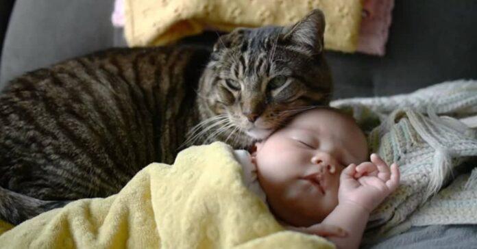gatto e bambino tanti motivi per vivere insieme