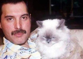 freddy mercury l'amore per i gatti