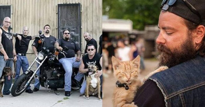 gang organizzazione salva animali