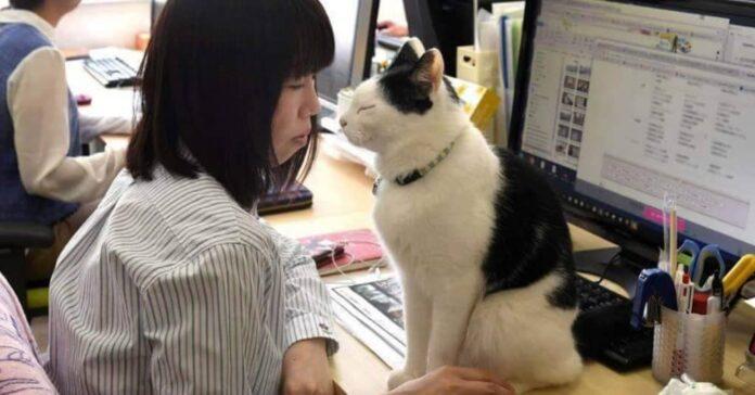 gatti antistress in un'azienda