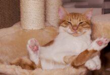 intrattenere il gatto in casa