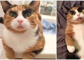 la-gatta-dalle-strane-sopracciglia
