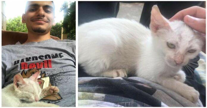 la-gattina-che-ha-scelto-il-suo-protettore