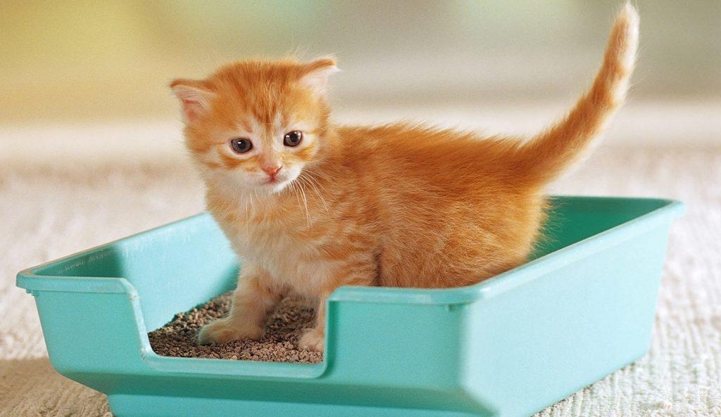 gatto in una lettiera fai da te