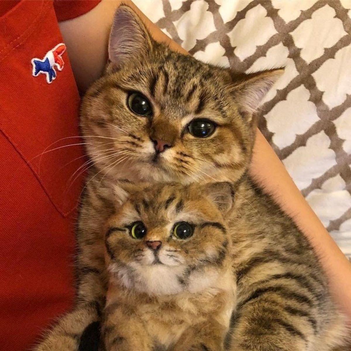 gatto- e-suo-figlio