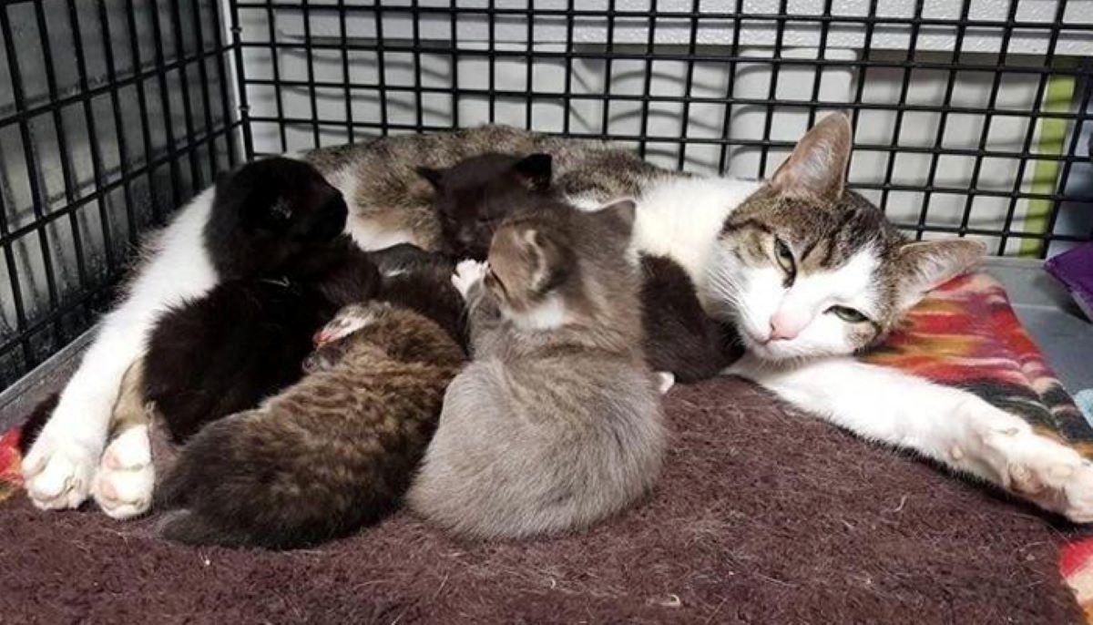 mamma-gatto-con-cuccioli-e-lince