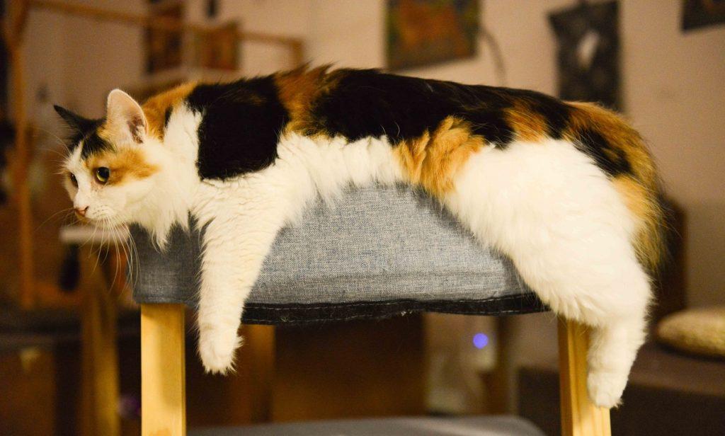 gatto triste su sedia