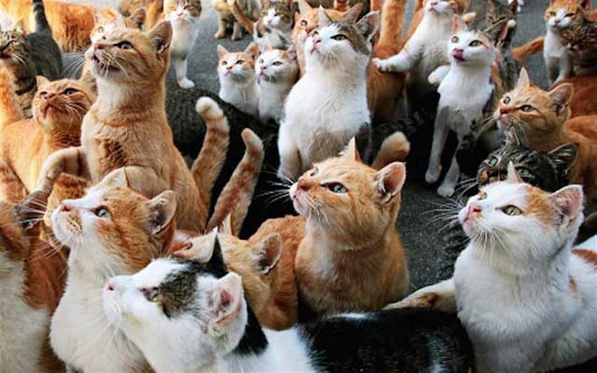 grosso gruppo di gatti