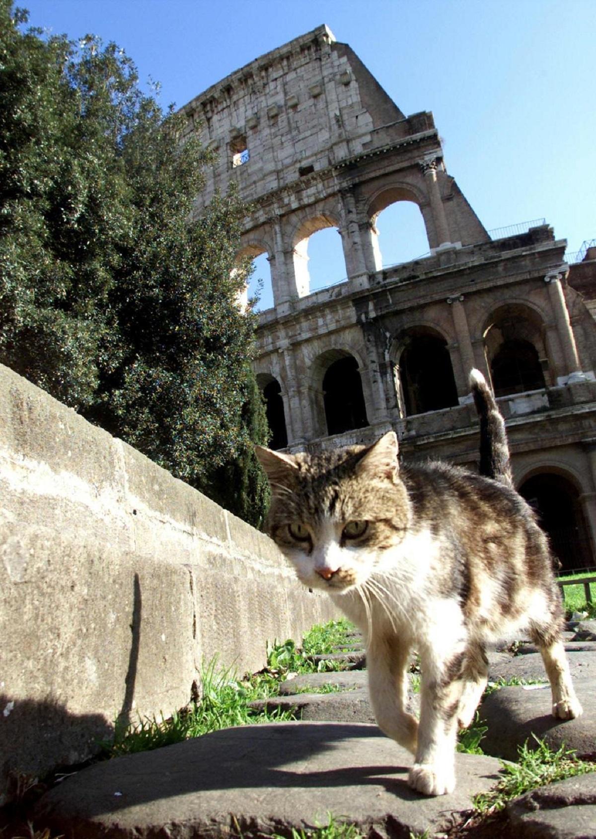 gatto colosseo 2