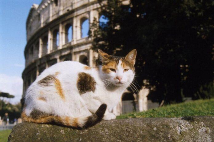 gatto colosseo
