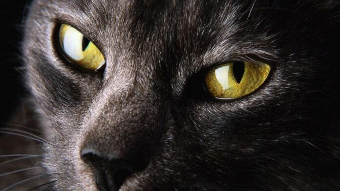 occhi-di-gatto