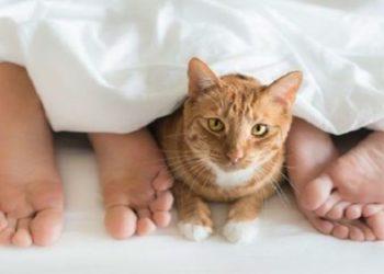 perchè-il-gatto-vuole-dormire-nel-mio-letto