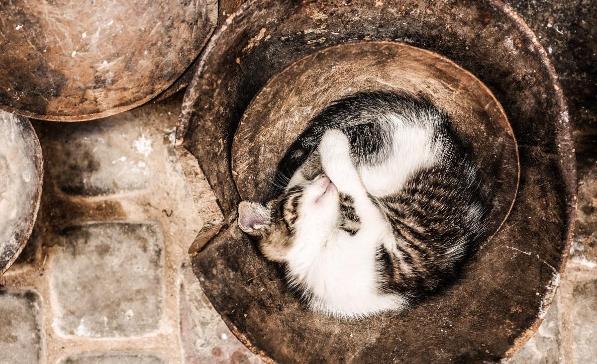 gatto dorme in vaso