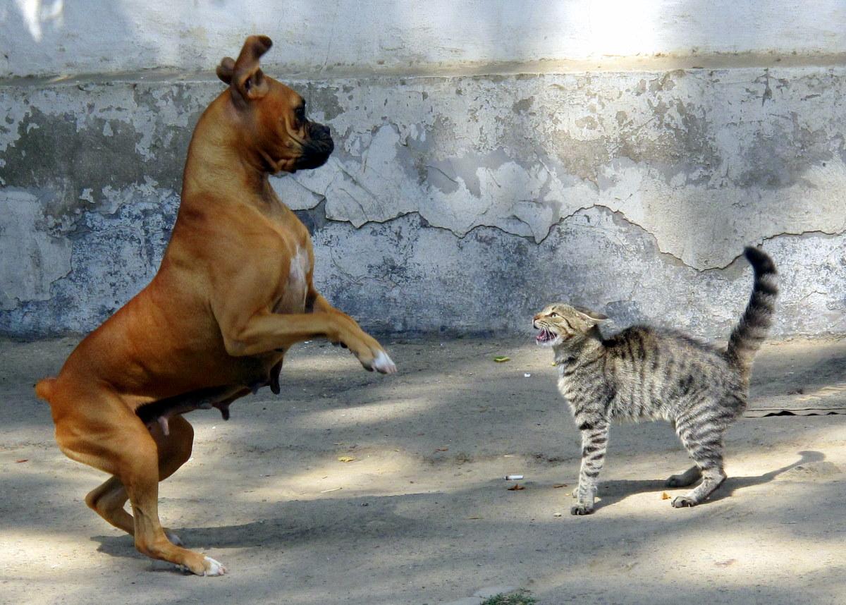 gatto contro cane