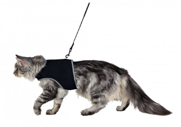 gatto con pettorina nera