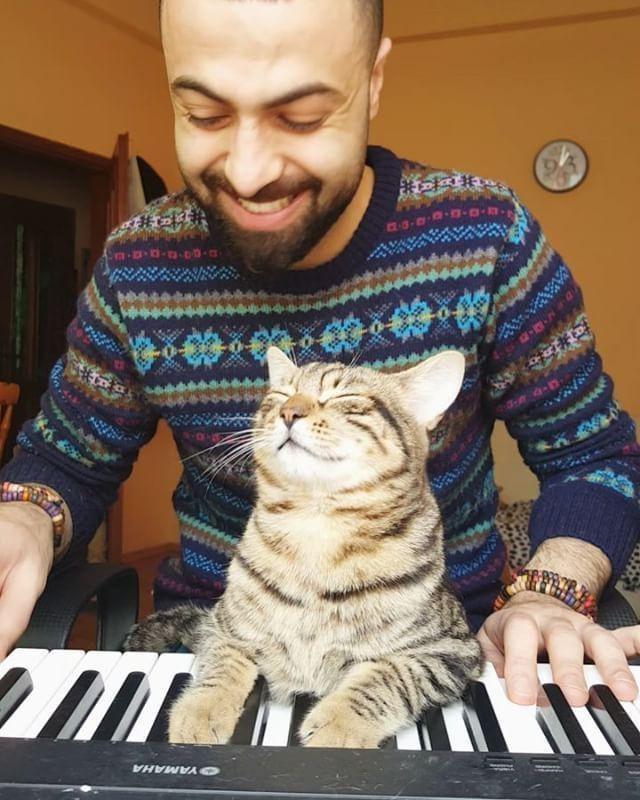 pianista-suona-con-gatto