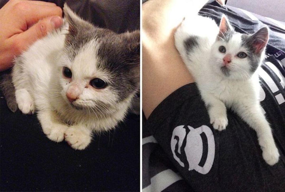 gattino-salvato-e-felice